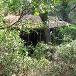 Pre-restoration, the cabin in the brush